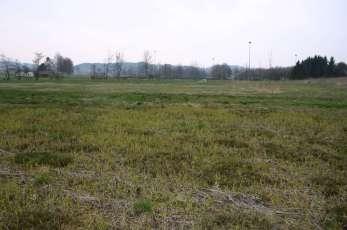 Feuchtwiese bei Weng © Wildland-Stiftung Bayern