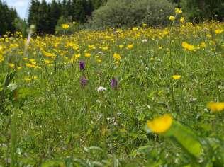 Orchideenwiese © Wildland-Stiftung Bayern