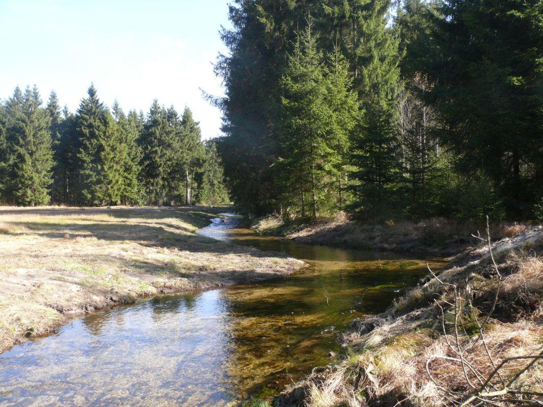 Osterbach nach der Maßnahme©A. Hofmann/Naturpark Bayerischer Wald