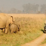 5 national parks you musut visit in india