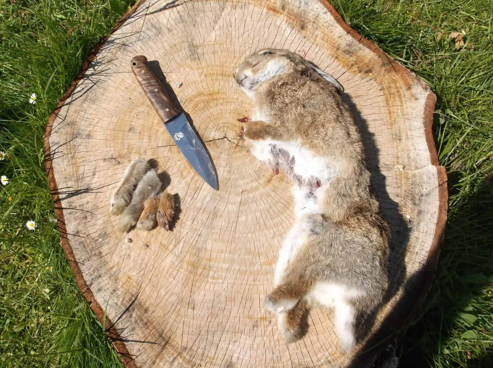 Examplary Rabbit Skinning How To Skin Butcher A Rabbit Dorset Bushcraft Courses How To Butcher A Wild Rabbit How To Butcher A Rabbit Meat houzz-03 How To Butcher A Rabbit