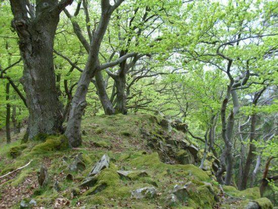 Wildnistour mit dem Waldökologen