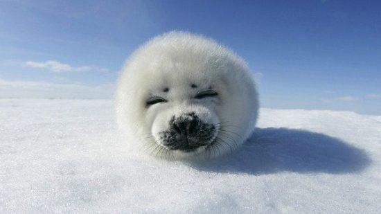 Ausstellung in Espenau von Robben und Bächen