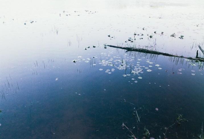Drifting Light Leaks and Accidental Frames in June 04