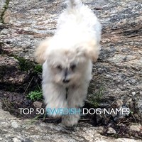Top 50 Swedish Dog Names