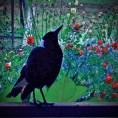 Maggie on the verandah