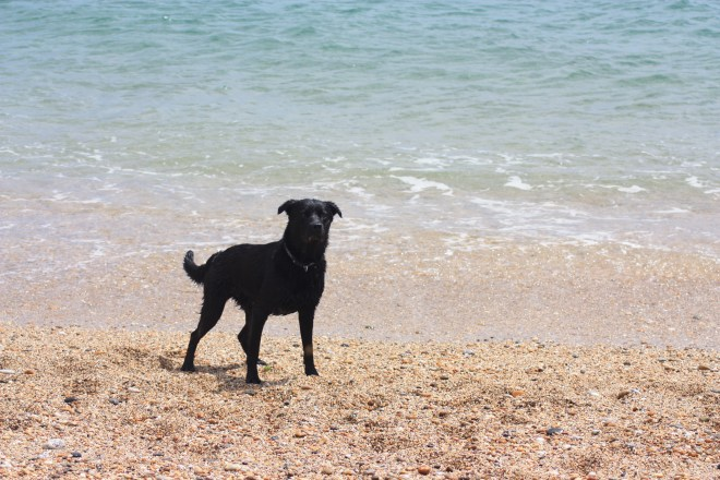 Plenty of dog friendly beaches in the area!