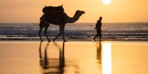 Sportif_Essaouria_windsurf_kitesurf_holiday_sunset_camel_800x533