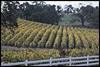 sierra foothills wineries