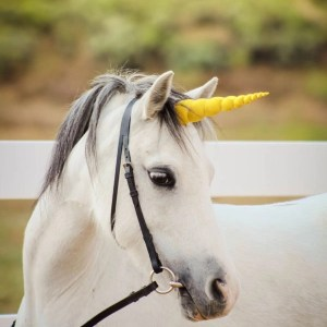 Gold Unicorn Horn for Horse