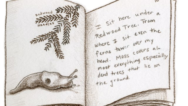 Drawing of a Nature Journal