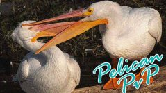 peliweb