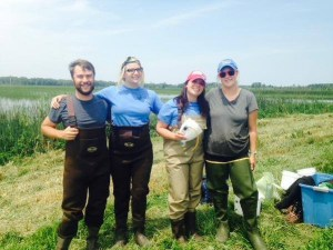 WNY PRISM 2015 Invasive Species Management Crew (left to right: Mat Bilz, Lexy Wagner, Patricia Shulenburg, Lucy Nuessle) getting ready to collect purple loosestrife biocontrol beetles. photo credit: WNY PRISM