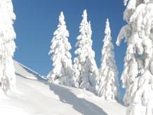 Tiefweiß verschneite Fichten auf 2000 Metern Höhe: Ein Blick den sich wohl jeder Wintersportler wünscht.