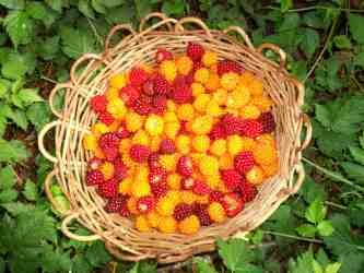 Salmonberry Basket by M. Andrew Twele of the Wolf College
