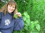 Wolf Camp and the Wolf College co-owner and lead instructor, Kim Chisholm, demonstrates how to safely harvest stinging nettle leaves without gloves.