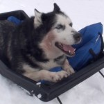 Dogsledding & New Intro