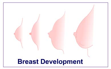 young girls breast development