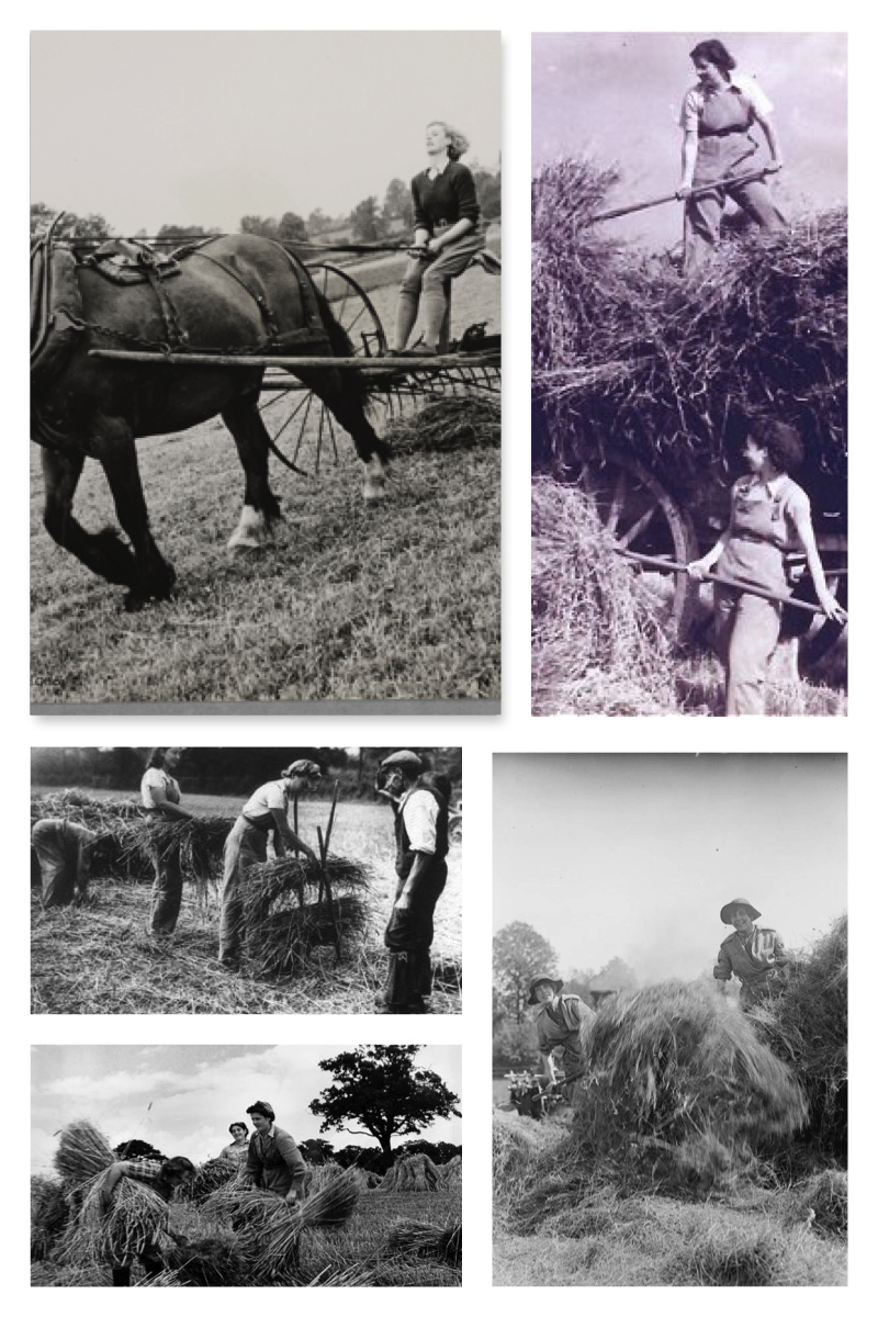 June Activity of the Month: Haymaking