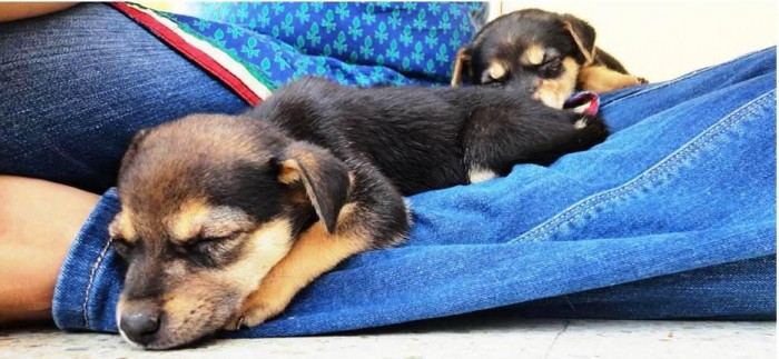 Cookie & Chuck fostered by Mansi