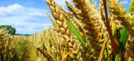 Add food grains in your diet