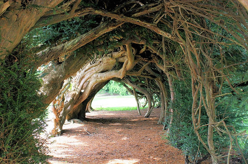 Yew Tunnel, UK