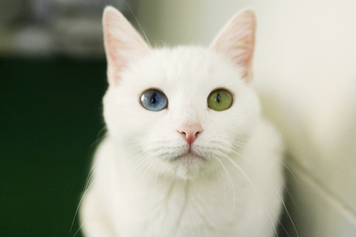 spanish cat name