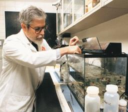Percobaan dengan kadal air dalam ruang