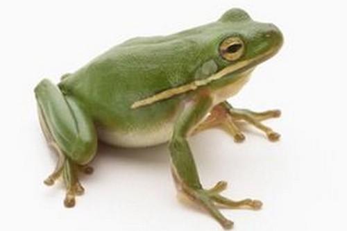 Astronot katak Hewan