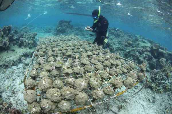 Alarming Ways We Are Losing Our Coral Reefs