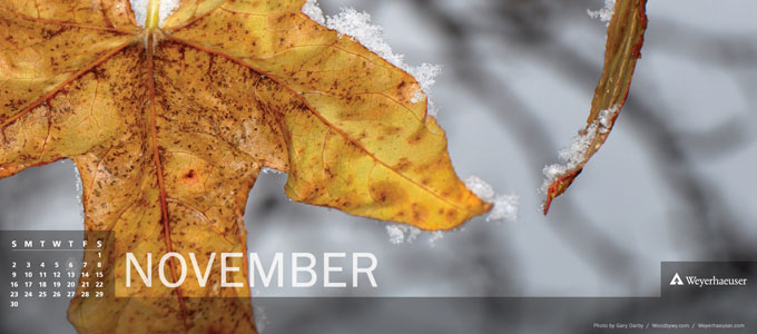 Digital Calendar: November 2014