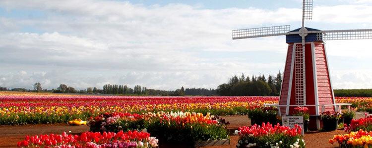 tulip-fest-gallery3