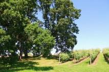 vineyards resize