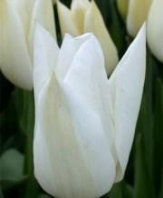 white elegance_2