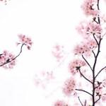 bloesemtakken voor in je huis