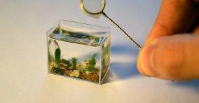 Pecera en miniatura