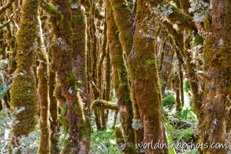 Rain forest near lake Marian