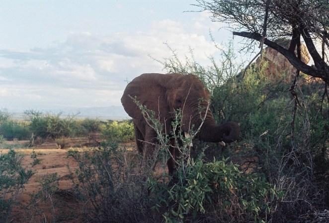 Kenya Safari 5