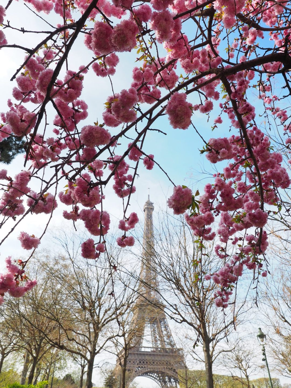 Eiffel_Tower_Cherry_Blossoms