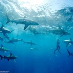 swim_with_sharks_1071267336_770