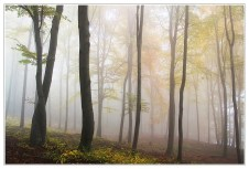 forest trees nature fog mist mystery woods