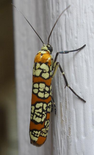 The Bug 1