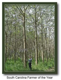 Paulownia Tree