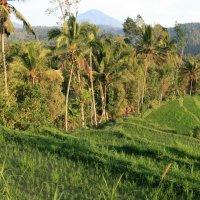With the clove pickers in Munduk: Trekking in Bali