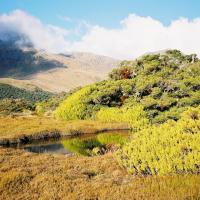 Hiking in New Zealand: Preparing for the Milford Track