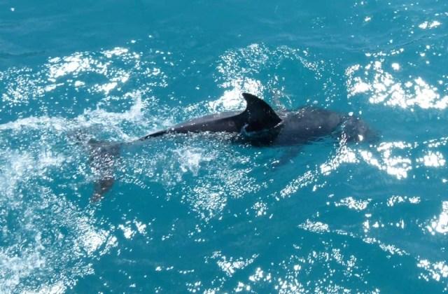 Dolphin at Kaikoura, New Zealand