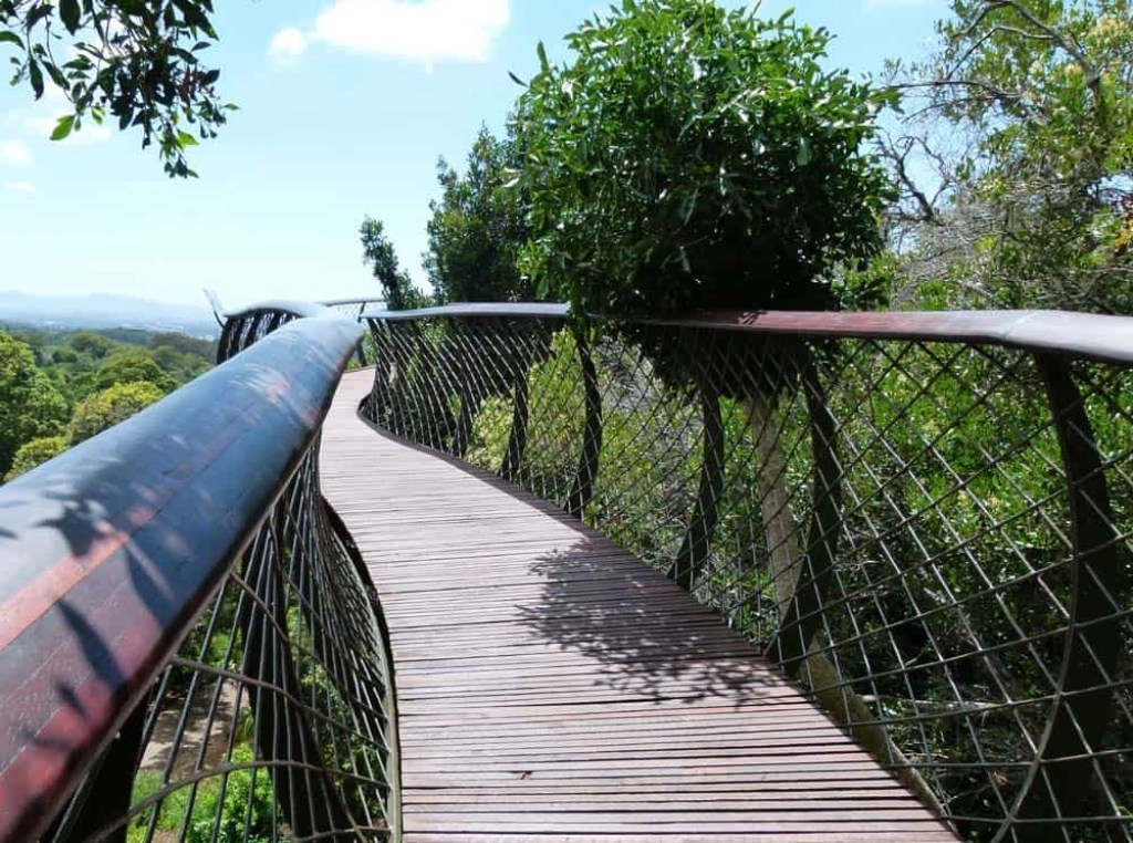 Boomslang, Kirstenbosch Botanical Gardens, Cape Town