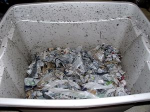 512px Worm composting 1 300x225 How to Make the Simplest Worm Composting Bin