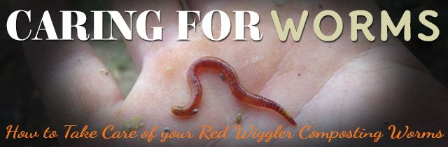 Caring-For-Worms