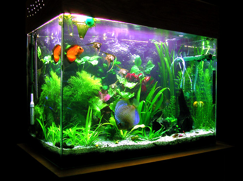 Serious infection from a fish tank   Worms & Germs Blog